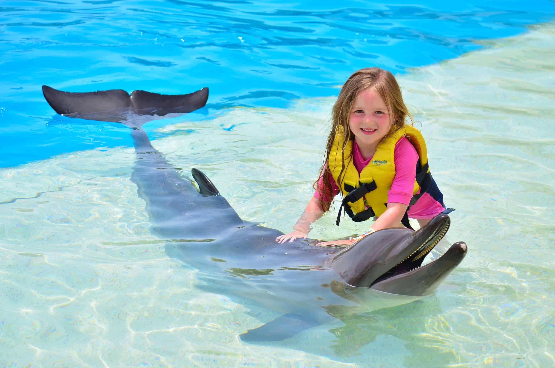 Dolphin's Encounter