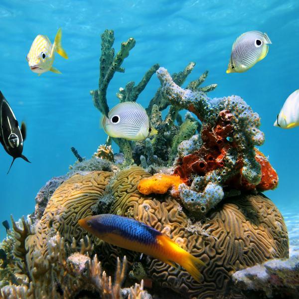 El Cielo reef